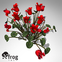 XfrogPlants Cyclamen