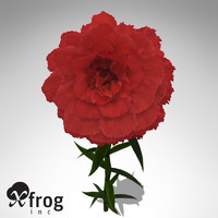 XfrogPlants Carnation