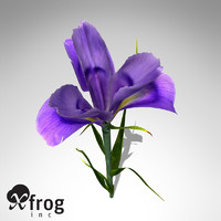 maya xfrogplants dutch iris plant