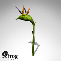 xfrogplants bird paradise plant 3d model