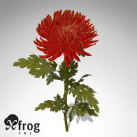 pompon chrysanthemum plant flowers 3d model