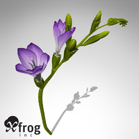 xfrogplants freesia plant 3d model