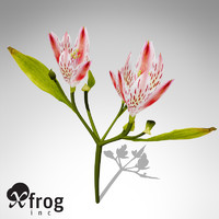 xfrogplants pink tiger lily 3d model