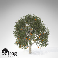 chinese persimmon kaki tree 3d model
