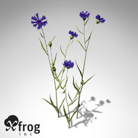 3ds max xfrogplants cornflower plant