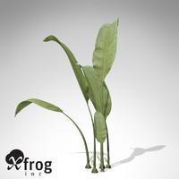 xfrogplants macrotaeniopteris flora 3d 3ds