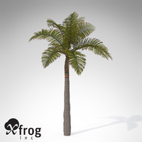 xfrogplants king palm plant max