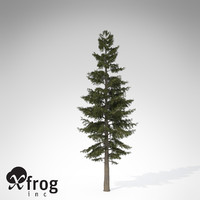 3d xfrogplants white fir tree
