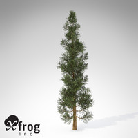 xfrogplants incense cedar tree 3d model