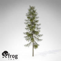 3d xfrogplants tamarack tree model