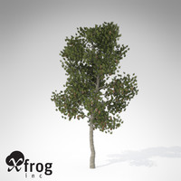 3dsmax xfrogplants coulter pine tree