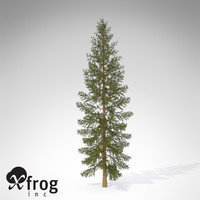 XfrogPlants Douglas Fir