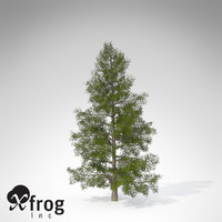 3d xfrogplants california nutmeg tree model