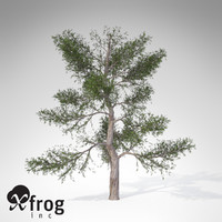 xfrogplants red juniper tree 3d lwo
