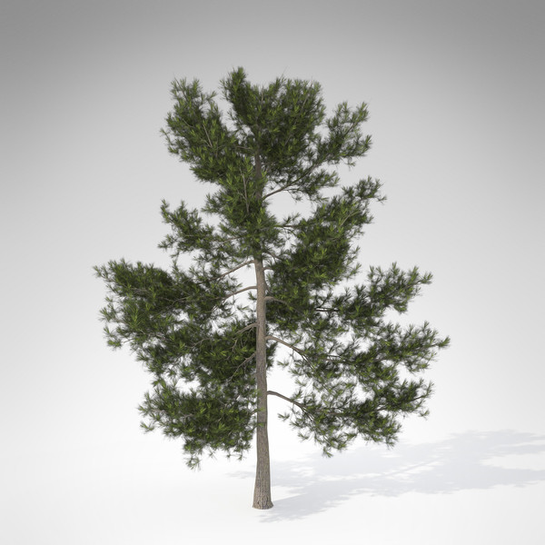 xfrogplants eastern white pine 3d model - XfrogPlants Eastern White Pine... by xfrog