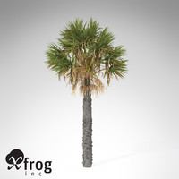 xfrogplants palmetto palm 3d model