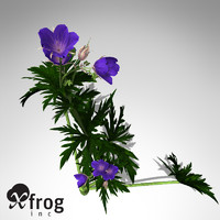 3d xfrogplants meadows cranebill plant model