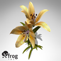 xfrogplants lily plant flowers 3ds