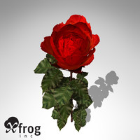 XfrogPlants Rose