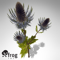 xfrogplants sea holly plant 3d c4d