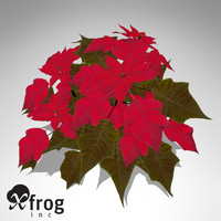 XfrogPlants Poinsettia