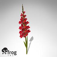 3d xfrogplants gladiolus plant