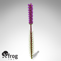 3d model xfrogplants blazing star plant