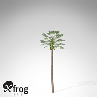 3d xfrogplants papaya plant tree model