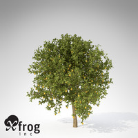XfrogPlants Lemon Tree