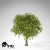 xfrogplants grapefruit tree fruits 3d model