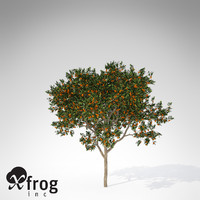 sweet orange tree 3d model