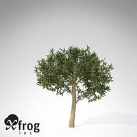 japanese medlar tree japan 3d model
