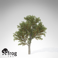 xfrogplants sweet cherry tree 3d 3ds
