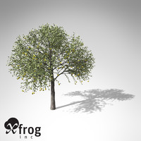 xfrogplants guava tree 3d 3ds