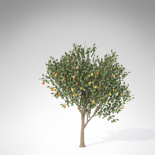 xfrogplants pear tree 3d max - XfrogPlants Pear Tree... by xfrog