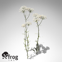 XfrogPlants Common Yarrow