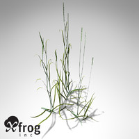 couch grass plants xfrogplants 3d model