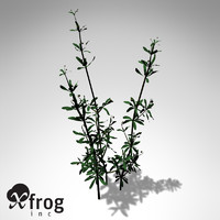 3dsmax xfrogplants cleavers herb plants