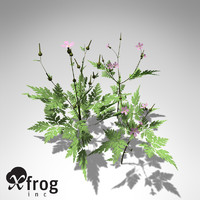 3d 3ds xfrogplants herb robert plant