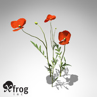 XfrogPlants Field Poppy
