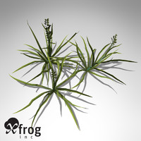 3d xfrogplants annual blue grass