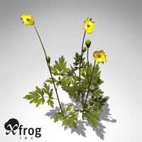 XfrogPlants Creeping Buttercup