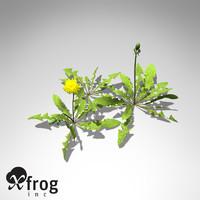 XfrogPlants Dandelion
