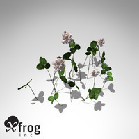 3d model xfrogplants white clover plant