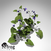 3d model xfrogplants pansy plants