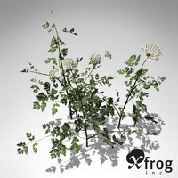 xfrogplants anthriscus sylvestris plant 3ds