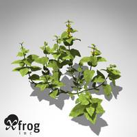 xfrogplants galeobdolon luteum plant 3d 3ds
