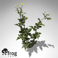xfrogplants geum urbanum plant max