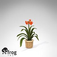 xfrogplants kaffir lily plant 3d model