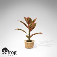 croton petra plant 3d model
